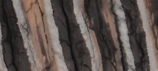 mammoth molar handle
